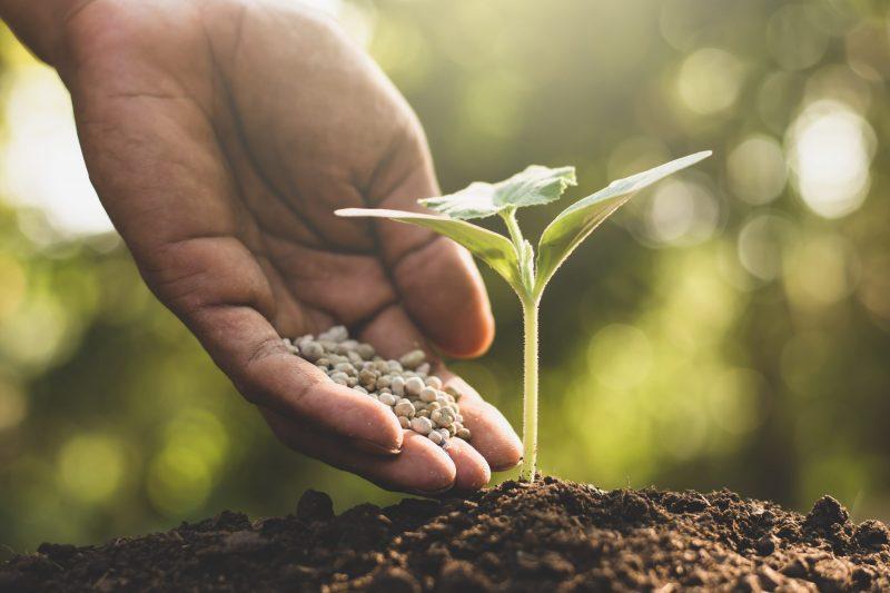 fertilizer for soil