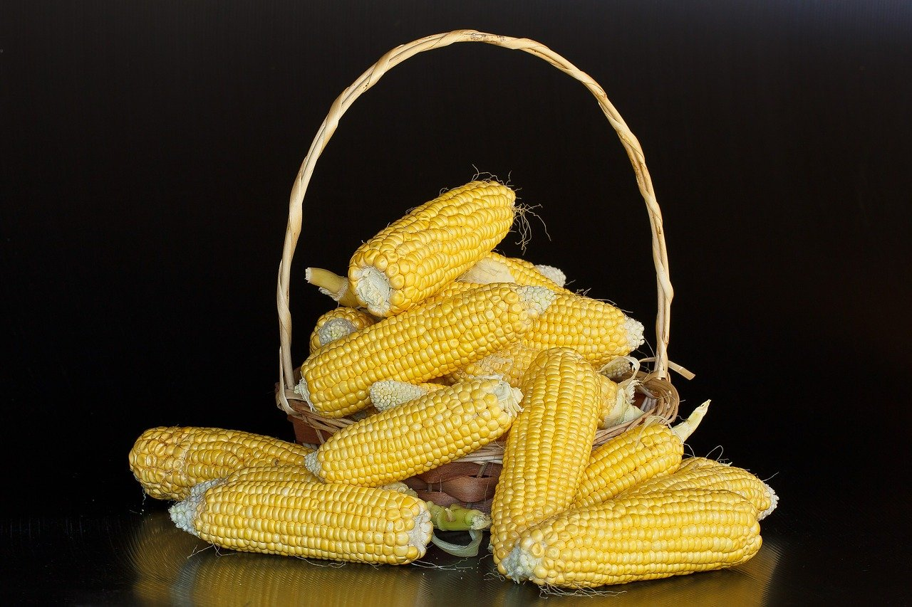 maize starch suppliers